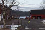 Her ser vi også noen hester når vi passerer Skjerven gård