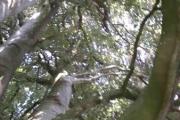 Tirsdag - husker du treet og bønnestengelen? Det virker nesten slik
