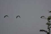Tirsdag - store fugler på vei