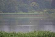 Tirsdag - fiskene vaker i elven