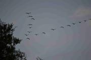 Mandag - fugler er det også her