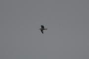 Og jeg vil ha bilder av andre fugler en Måker også da, så vi gjør det litt annerledes i dag