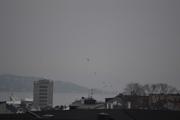 Nå på ettermiddagen er det samme værtypen men det er litt flere fugler i luften