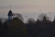 Tårnhuset med 3 fugler som flyr forbi