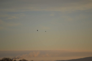 Morgensolen og fugler i luften