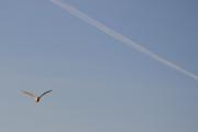 Men nå kommer det en fugl i retning mot meg