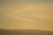 Solen er i ferd med å stige opp og nesten rett mot sola som skinner opp himmelen flyr det en fugl
