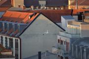 Nå er det mest Måker her oppe på taket