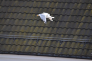 Og ta et bilde av en Måke som flyr lavere en du står og med et tak som bakgrunn