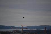 Med Oslofjorden i bakgrunnen