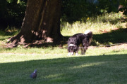 Klokken er ikke 08.00 på morgenen enda, men hundeeiere er allerede ute og lufter hunden