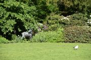 Det første jeg ser er Rådyret i Dronningparken, det er den minste skulpturen i bronse her i parken