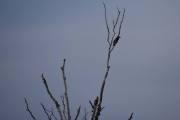 Men så er jeg på fugletur igjen, her ser jeg en spennende fugl