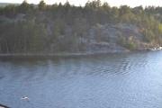 Noen steder kjører vi ganske nære land, ser også noen svaner langs kanten