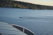 Noen leker seg med bølgene båten lager
