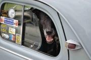 Har man en fin gammel bil trenger man vakthund