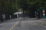 Og her er fuglene så dresserte at de bruker fotgjengerfeltet når de skal over gaten, da vet de at vi stopper opp litt