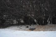 På Skillebekk mater folk fugler, det så jeg i dag
