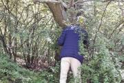 Min far er oppvokst på Tøyen og leter etter et tre fra guttedagene