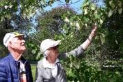 Her har vi funnet Duetreet også kalt lommetørkle treet