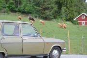 Vi kan til og med kjøre til Tyrifjorden for å få Okser og Renault i sammen på bilde
