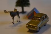 Renault 6 og Elg (Alces Alces)