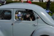 Renault Dauphine og en sort hund