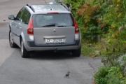 Renault Megane og en Nøttekråke