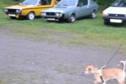 Renault og hvilken hund Knut?