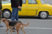Renault og hvilken hund?