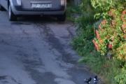 Renault og to Skjærer hvor en er unge
