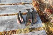Dette var dagens fangst og ingen var våres
