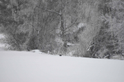 Ja bare se godt etter, jeg fant en fugl på bakken