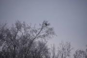 Her oppe er det også noen fugler og dette er Skjæra