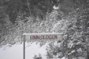 Aha, er det dette denne skogen heter