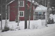 Nå skal vi ikke titte inn i vinterhagene til folk, men vi gjør et unntak