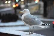 Ok, en fugl. Jeg lover at det ikke skal bli så mange fugler på turen