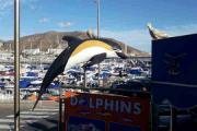 Han startet så fint, men nå er det fugler og delfiner - HALLO! Men etter en telefonsamtale forteller han meg at det er to Duer også der - jeg bøyer meg i støvet