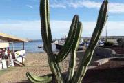 Ok Vidar - En kaktus på stranden, kan vi gå videre på Renault nå?