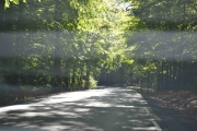 Vi kjører inn i Bøkeskogen i Stokke