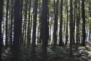 Da gikk jeg og Knut dypt inne i denne skogen og knipset bilder av alt vi så der inne