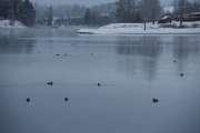 Den andre veien er det også mange fugler på elven