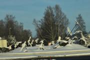 Det er to rundkjøringer på Skarnes, kan ikke se at noen fugler mangler her. Men det ser ut som om de hvite fuglene er fanget i en virvelvind