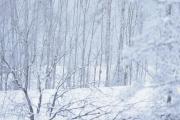 4 februar 2019 - Knut vinter bilde og han leter etter Ugler