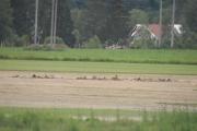 Spurvehauken sitter der langt borte, men prøv å få til et skarpt bilde i 100 km i timen - umulig så langt borte