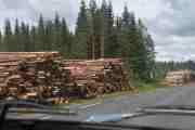 Her ser vi de beskjedne tømmerstokkene som skal hugges opp til ved før vinteren, det er kaldt oppi her
