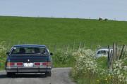 Ok da, to veteranbiler og to sauer i samme bilde for holde