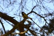 Det var en søt liten fugl da