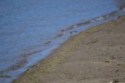 Går langs vannkanten og en fugl flyr plutselig opp