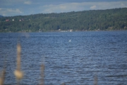 Fin blåfarge på vannet og en fugl langt der ute